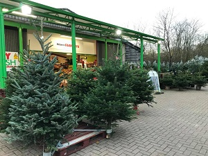Kent Christmas Tree Farms Choose And Cut Christmas Trees Tree Lots